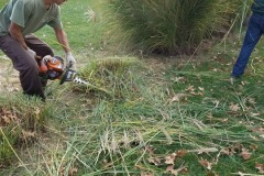 Ornamental Grass Trimming