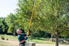 Tree Limb Thinning